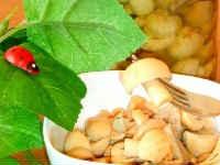 Как солить сыроежки на зиму- рецепты в домашних условиях (горячий и холодный способ)