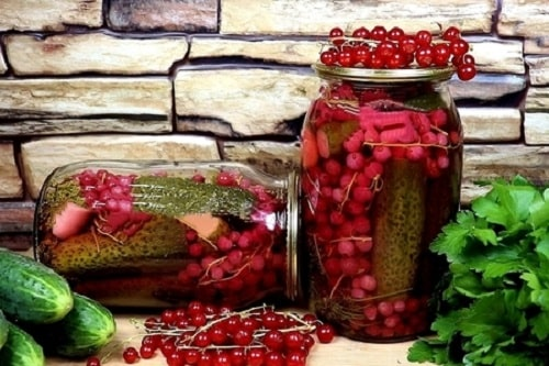 Засолка огурцов на зиму с красной смородиной